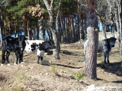 Peña Águila–Valle de la Fuenfría; viajes organizados para jovenes viajes de fin de año siete p